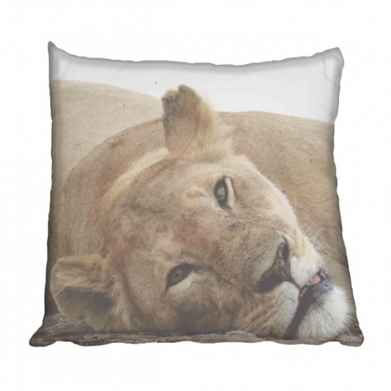 African Lioness Scatter Cushion